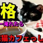 【猫動画】猫の前でコーヒーを本格的に淹れたら、ハプニングもあったけど自宅が最高の 猫カフェ になった!!【iPhone12Proで撮影】