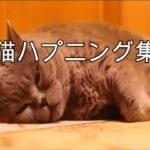 猫ハプニング集3