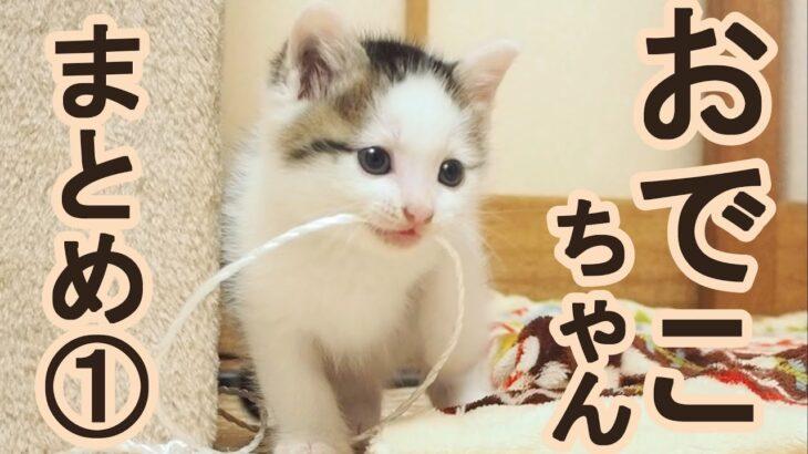 ばかりの頃の子猫まとめ動画【赤ちゃん猫】【保護猫 子猫】