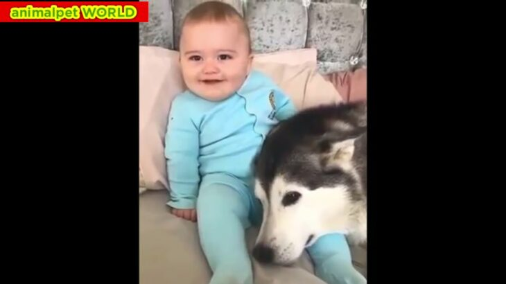 爆笑!おもしろ犬猫鳥珍ペットの傑作ハプニング映像集#066 可愛い犬🐶猫🐱鳥🦆兎🐰キリン🦒象🐘ハムスター🐹魚🐟の愛らしい動物がいっぱい!涙と感動癒し【animalpet WORLD】