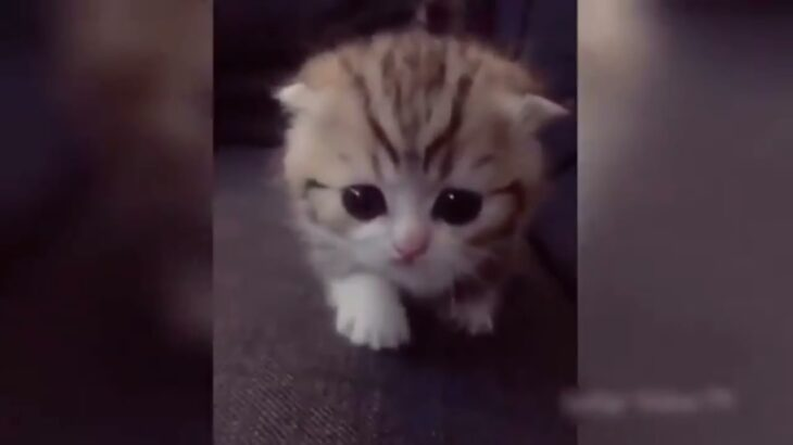 【2021】爆笑10分間、犬、猫、動物のおもしろ、ハプニング映像
