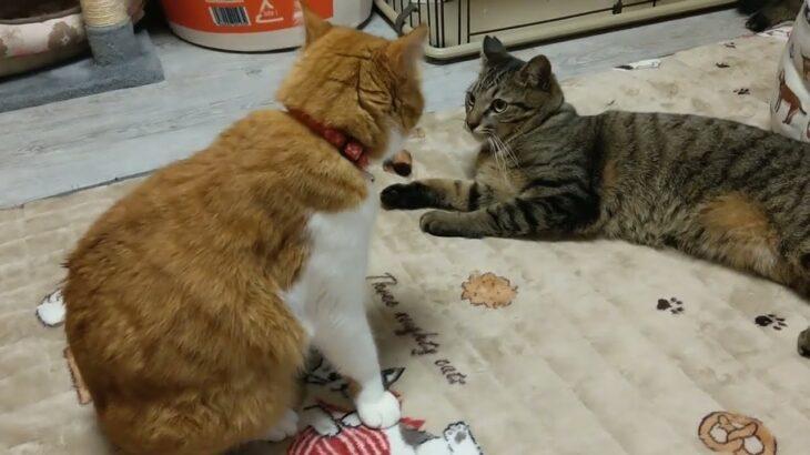子猫の時に親猫から受ける教育  [Aiming to be the best cat shelter in the world] 4月14日の2Cの社員達