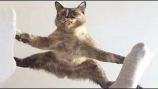 [おもしろい] 最高におもしろ犬, 猫, 動物のハプニング, 失敗画像集, アニマルセラピー #6