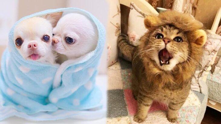 「かわいい猫と犬」 笑わないようにしようとしてください 最も面白い動物の映画