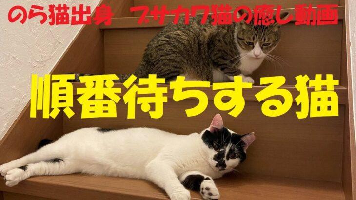 順番待ちする猫たち【ブサカワ猫の癒し動画】