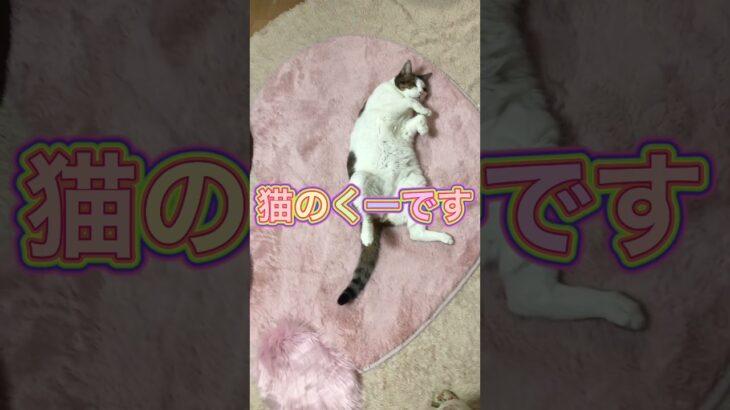 【猫動画】猫の癒し動画 寝顔が超可愛い💕