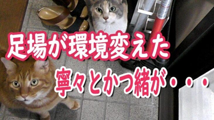 猫白血病のかつ緒 自宅改修工事で思わぬハプニング続出