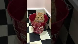 バケツに入る猫が何気にかわいい~